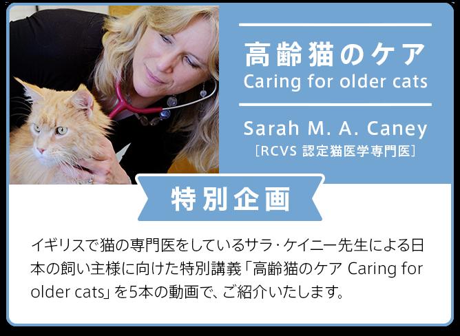 高齢猫のケア