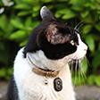 愛猫の迷子対策