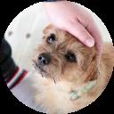 愛犬との生活で必要なマナー