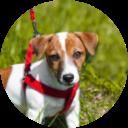 犬語辞典(犬のきもち)