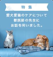 愛犬愛猫のケアについて獣医師の先生にお話を伺いました。