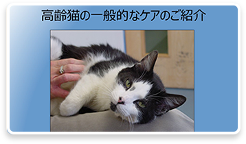 高齢猫の一般的なケアのご紹介