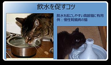 高齢猫の日常ケアの留意点