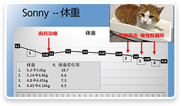 高齢猫の疾病 早期発見のためのコツ